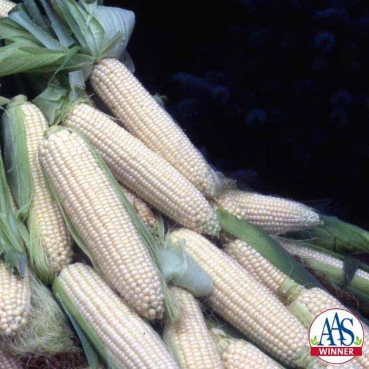 Corn, Sweet How Sweet It Is