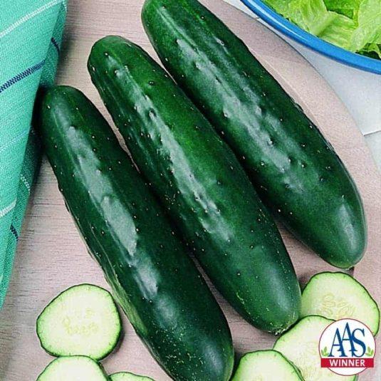 Cucumber Fanfare hybrid