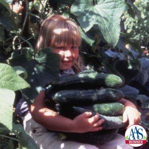 Cucumber Sweet Success hybrid