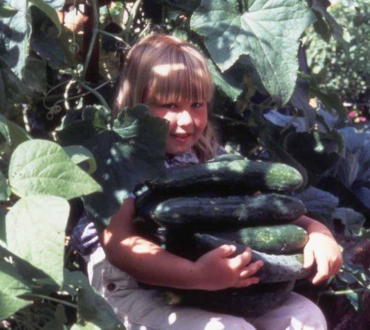 Cucumber Sweet Success