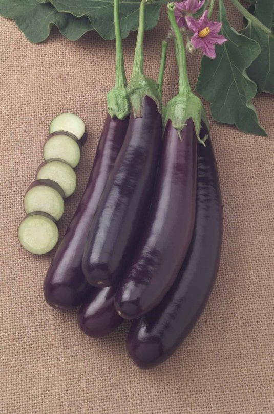 Eggplant Hansel F1 - 2008 AAS Vegetable Award Winner Hansel was bred by an eggplant lover.