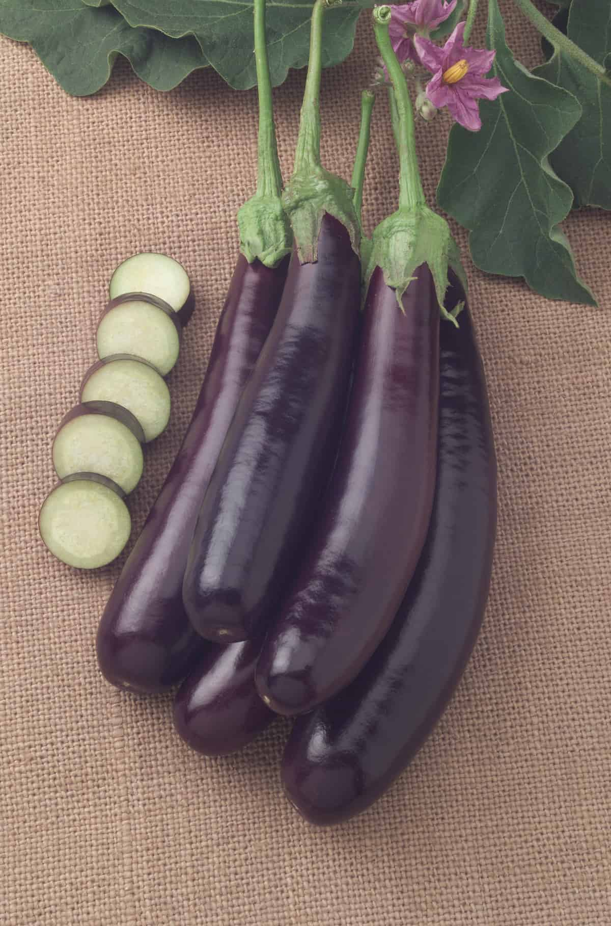 Eggplant Hansel F1 All America Selections