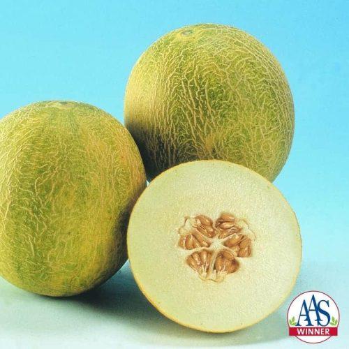 Melon Angel F1- 2003 AAS Edible - Vegetable Winner An early Mediterranean-type melon, Angel has a heavenly flavor.