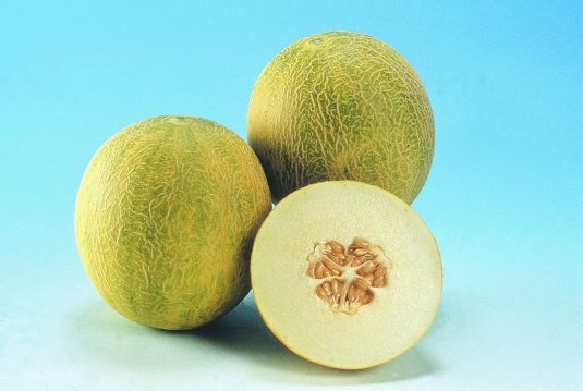 Melon Angel F1- 2003 AAS Edible - Vegetable Winner An early Mediterranean-type melon, Angel has a heavenly flavor.