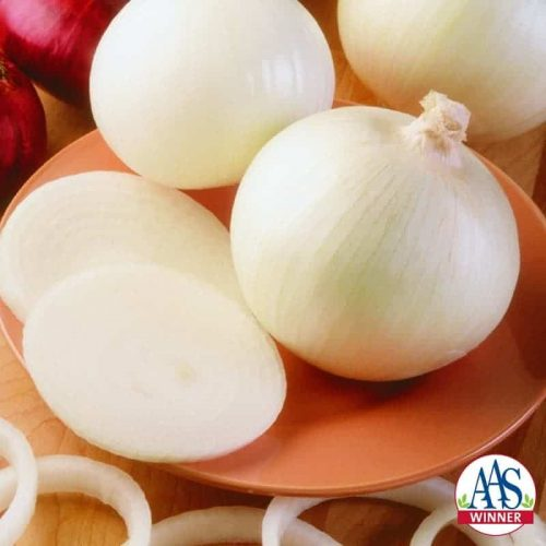 Onion Super Star F1 - 2001 AAS Edible - Vegetable Winner - Super Star is an improved white sweet onion recommended for all spring gardens in North America because it is day-length neutral.