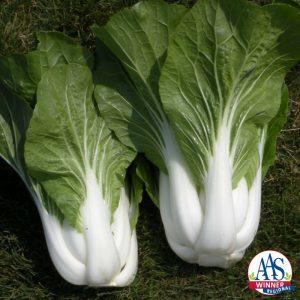 Pak choi Bopak AAS Winner Matures early and the tender leaves with crisp sweet stalks taste great.