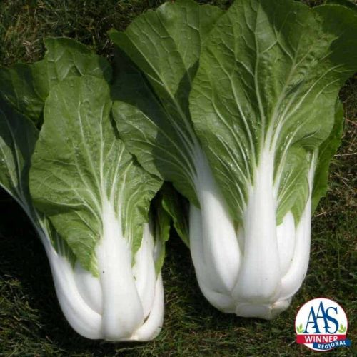 Pak choi Bopak AAS Winner Matures early and the tender leaves with crisp sweet stalks taste great.