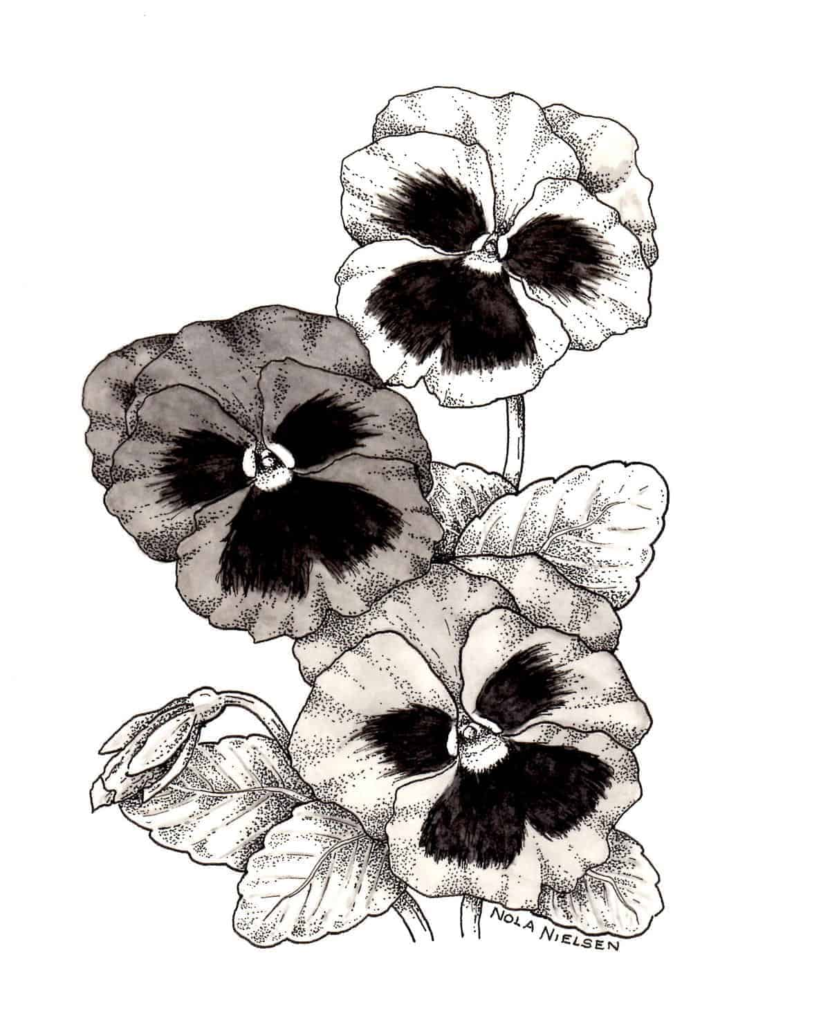 Pansy majestic giants mix all america selections pansy majestic giants mix f1 mightylinksfo