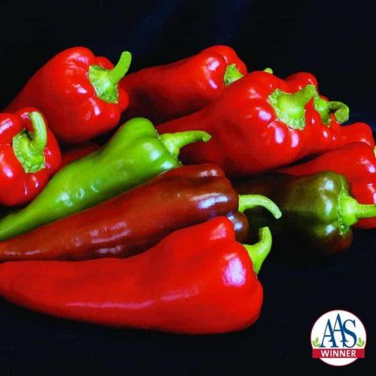 Pepper Carmen F1 - 2006 AAS Edible - Vegetable Winner 'Carmen' is an improved sweet pepper with an unusual shape.