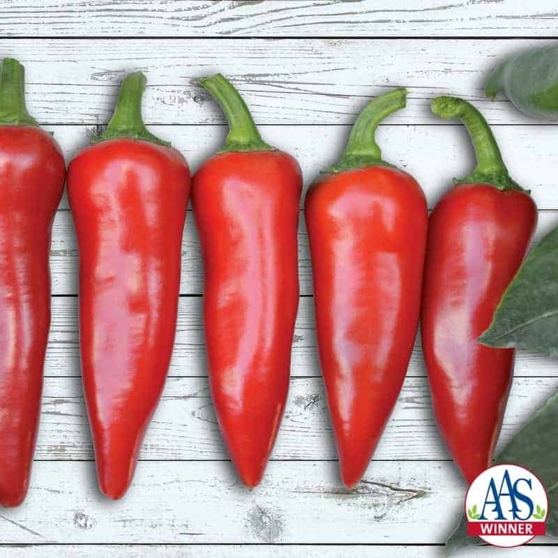 Pepper Flaming Flare F1 - AAS Winner - The fruit is ideal for making chili sauces and the heat of that sauce will increase depending on how late in the season the peppers are harvested.