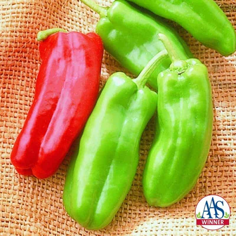Pepper Giant Marconi F1- 2001 AAS Edible - Vegetable Winner - Giant Marconi is an improved Italian grilling pepper.