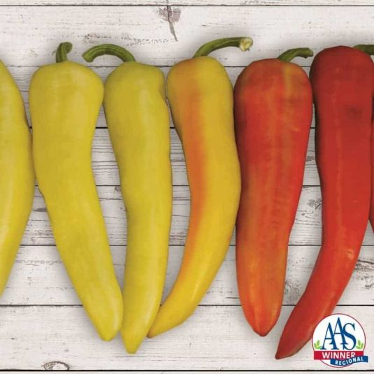 Sweet Sunset is a compact banana pepper that is vigorous and sets a large amount of concentrated fruit.