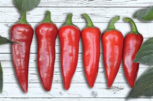 Pepper Flaming Flare - The fruit is ideal for making chili sauces and the heat of that sauce will increase depending on how late in the season the peppers are harvested.
