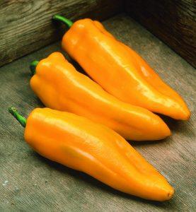 Pepper Mama Mia Giallo F1 2014 AAS Vegetable Award Winner Very early maturing yellow sweet Italian pepper.