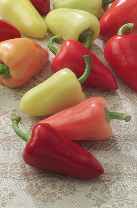 Pepper Mariachi hybrid 2006 - AAS Edible - Vegetable Winner Mariachi is named after the Mexican regional musical band that became popular in Jalisco, Mexico in the mid-1800's.