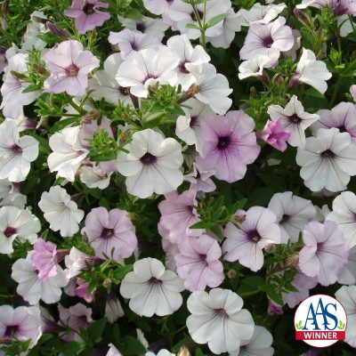 Petunia Tidal Wave Silver - 2002 AAS Flower Winner - Sporting silvery white blooms with dark purple centers, Tidal Wave Silver is distinct.