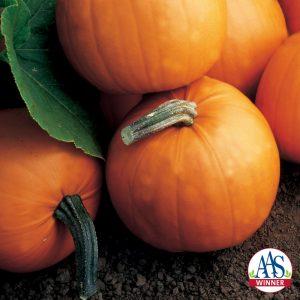 Pumpkin Orange Smoothie F1 - 2002 AAS Edible - Vegetable Winner Children will be infatuated with Orange Smoothie pumpkins.