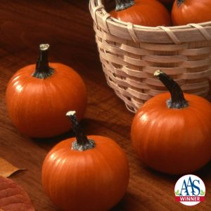 Pumpkin Wee-B-Little - 1999 AAS Edible - Vegetable Winner -The first miniature orange pumpkin weighs about 8 ounces to a pound, perfect for children to call their own.