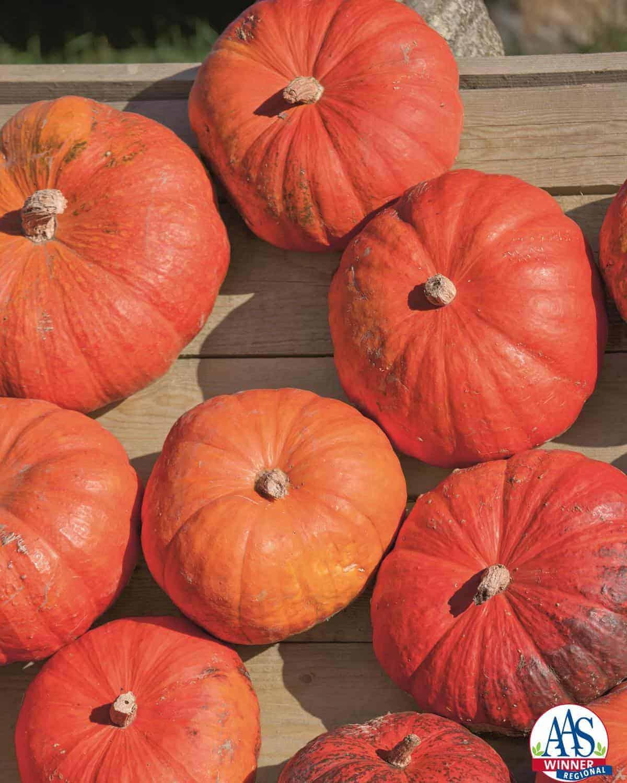 how to make a cinderella pumpkin carriage
