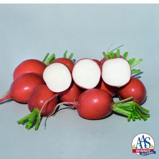 Radish Rivoli 2014 AAS Vegetable Award Winner Upright healthy leaves with fruit that is an even-colored bright red.