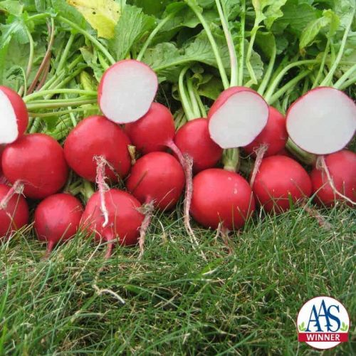 Radish Roxanne F1 - 2015 AAS Edible - Vegetable Award Winner Roxanne is a hybrid radish with uniform bright red color and a beautiful creamy white interior.