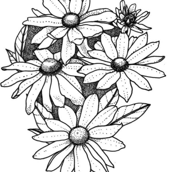Rudbeckia Prairie Sun - 2003 AAS Flower Winner This robust rudbeckia has distinctive blooms.