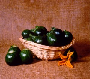 Squash Eight Ball F1- 1999 AAS Edible - Vegetable Winner - The first dark green, round, zucchini squash.