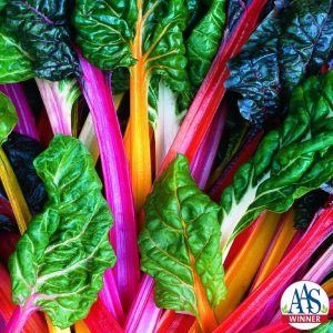Swiss Chard Bright Lights - 1998 AAS Edible - Vegetable Winner - Improved for colors, stems can be yellow, gold, orange, pink, violet or striped in addition to red or white.