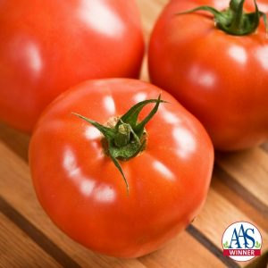 Tomato Celebrity