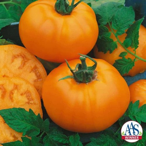 Tomato Chef's Choice Orange F1 2014 AAS Vegetable Award Winner Chef's Choice Orange F1 is a hybrid derived from the popular heirloom Amana Orange which matures late in the season.
