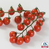 Tomato Jasper F1 2013 AAS Vegetable Award Winner Excellent taste, a long harvest window and outstanding performance in the trials contributes to this tomato's success.