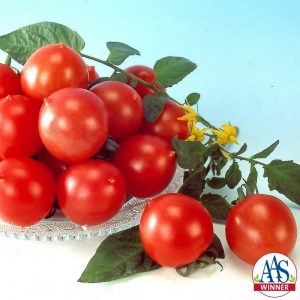 Tomato Jolly F1 - 2001 AAS Edible - Vegetable Winner - Jolly is a delicious, new pink tomato.