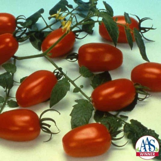 Tomato Juliet F1 - 1999 AAS Edible - Vegetable Winner - The one ounce tomatoes are produced in clusters like grapes on the long vigorous indeterminate vines.
