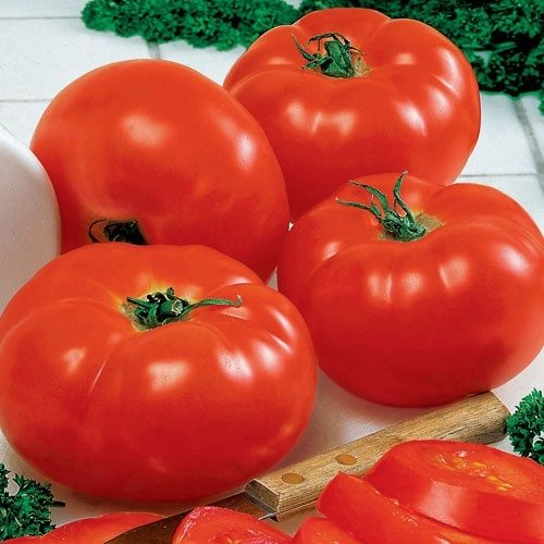 Tomato Big Beef Hybrid All America Selections