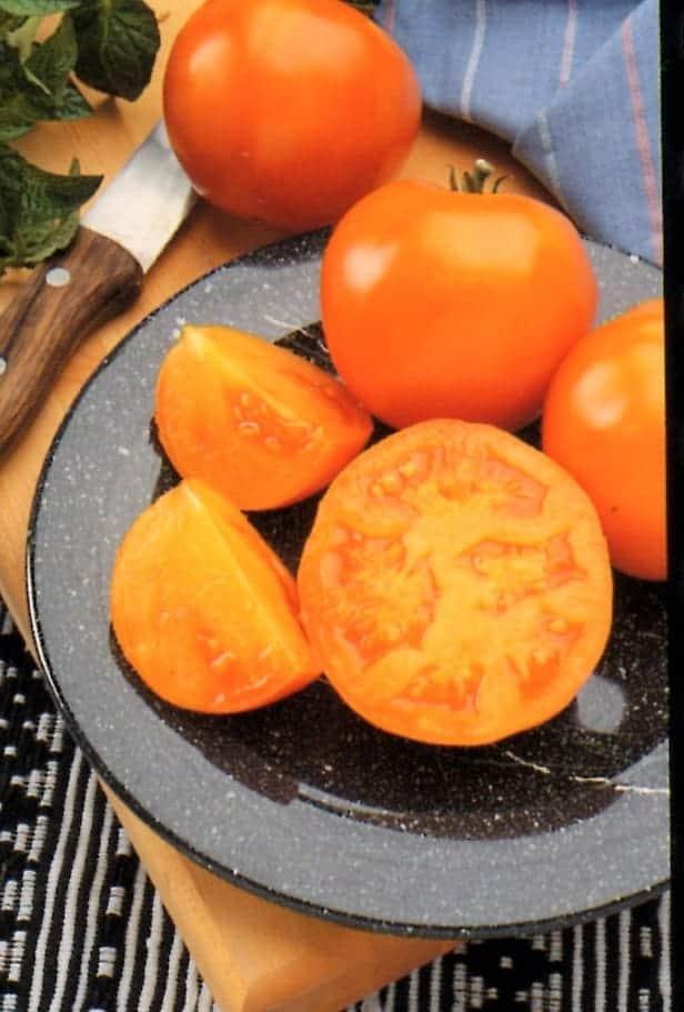 Tomato Husky Gold hybrid | All-America Selections