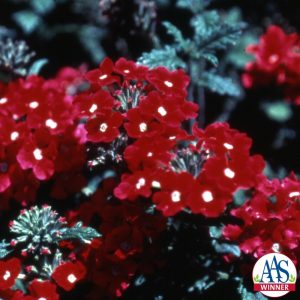 Verbena Sangria