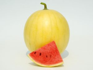 Watermelon Faerie F1 2012 AAS Edible - Vegetable Winner Faerie is a non-traditional watermelon in that it has a creamy yellow rind with thin stripes yet still yields sweet pink-red flesh with a high sugar content and crisp texture.