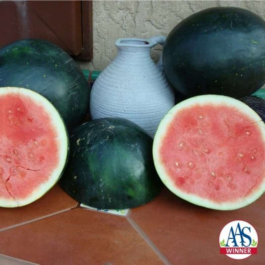 Add to List Watermelon 'Harvest Moon' F1 2013 AAS Vegetable Award Winner The first ever hybrid, triploid seedless watermelon to win a coveted AAS Award!