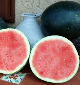 Watermelon Harvest Moon F1 2013 AAS Vegetable Award Winner The first ever hybrid, triploid seedless watermelon to win a coveted AAS Award!