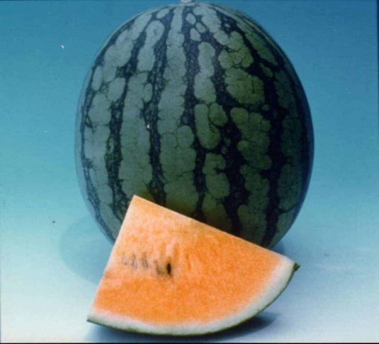 Watermelon New Queen F1 - 1999 AAS Edible - Vegetable Winner - Watermelon isn't just red anymore.