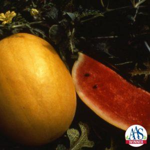 Watermelon Golden Crown