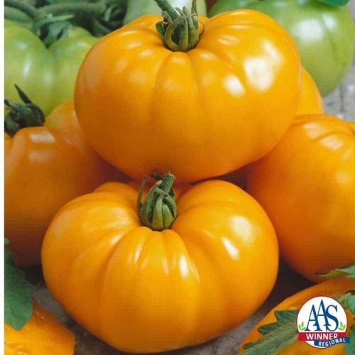 Tomato Chef's Choice Yellow F1 - 2017 Edible - Vegetable Winner