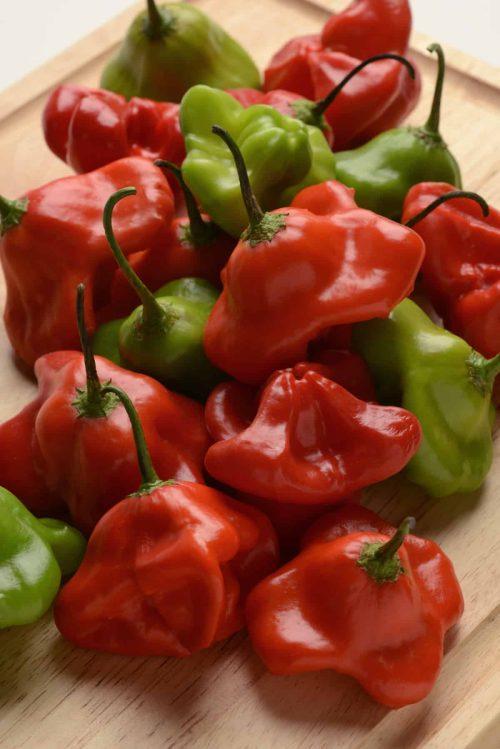Pepper Mad Hatter F1 - 2017 AAS Edible - Vegetable Winner