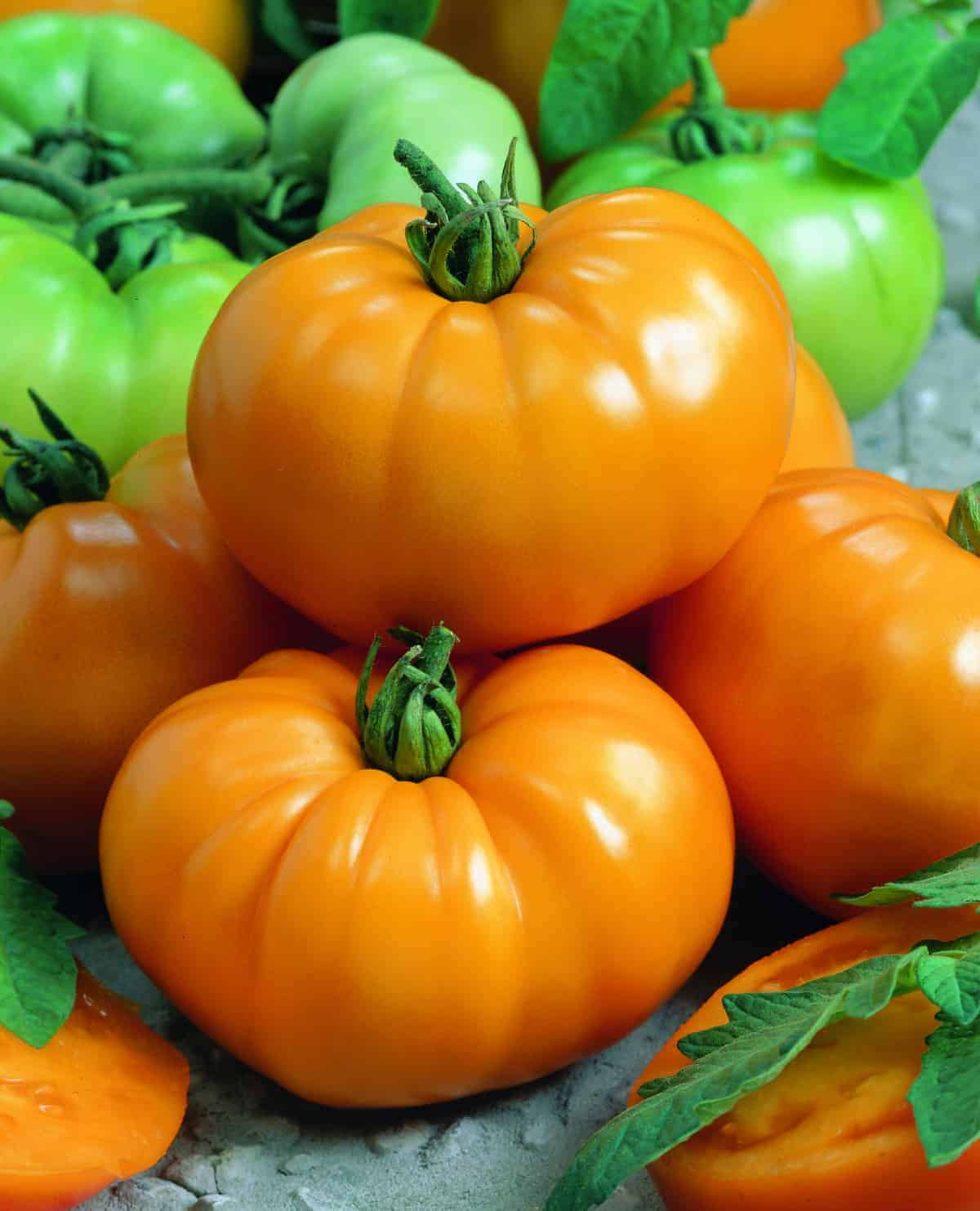 Tomato Chef's Choice Yellow F1 | All-America Selections