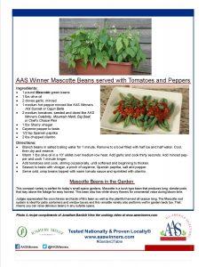 AAS Winner Mascotte Bean Recipe