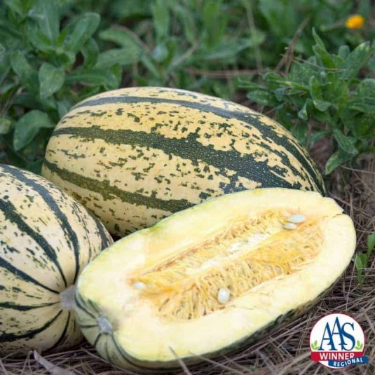 Squash Sugaretti F1 - 2017 AAS Edible-Vegetable Winner