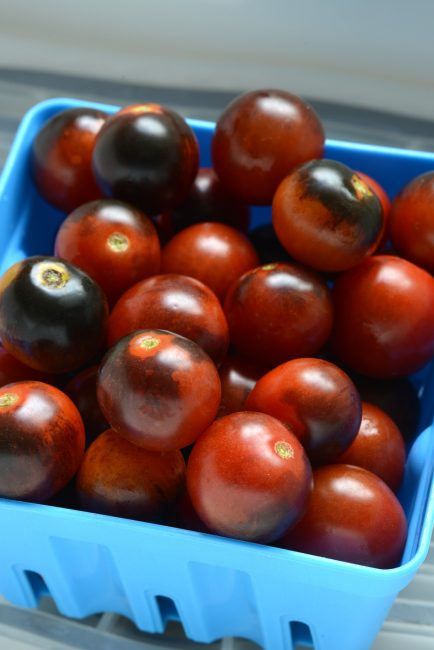 Tomato Midnight Snack - 2017 AAS Edible-Vegetable Winner
