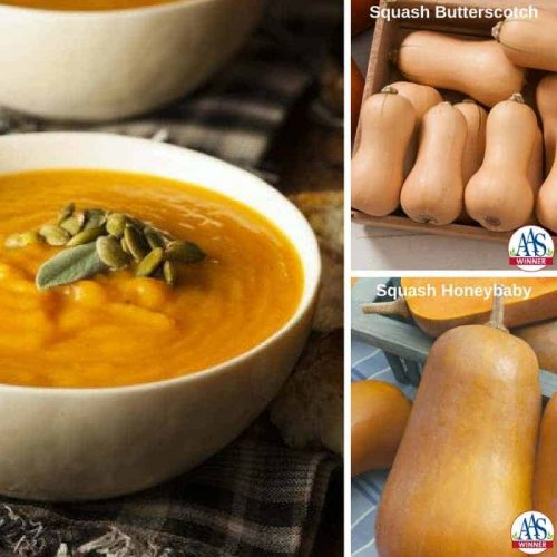 Make Butternut Squash - Meatless Monday Receipes with AAS Winners
