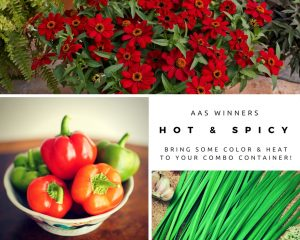 Hot & Spicy AAS Winners