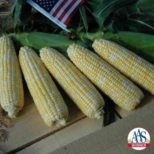 American Dream Sweet Corn